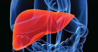 ما هو الكبد وما هي وظائفه؟