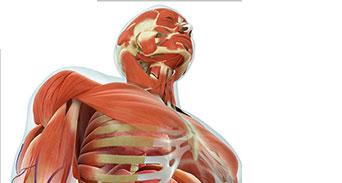 حقائق صحية عجيبة عن جسم الإنسان