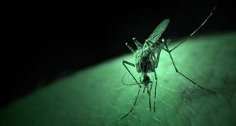 حقائق أساسية عن حمى الضنك