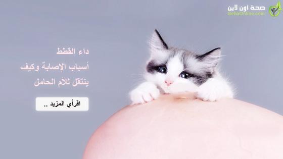 داء القطط أسباب الإصابة وكيف ينتقل للأم الحامل