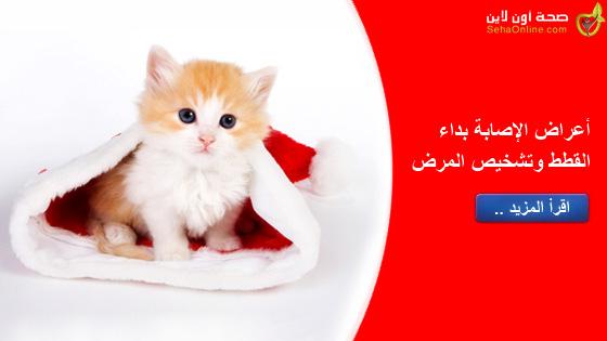 أعراض الإصابة بداء القطط وتشخيص المرض