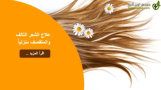 علاج الشعر التالف والمتقصف منزلياً