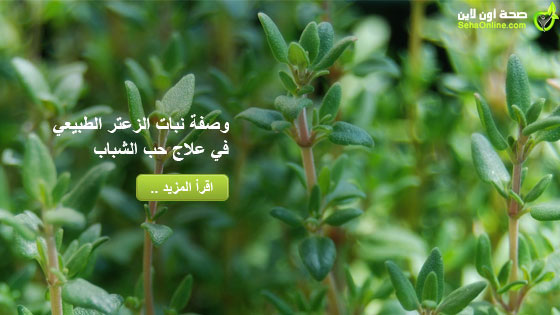 وصفة نبات الزعتر الطبيعي في علاج حب الشباب