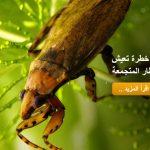 حشرات خطرة