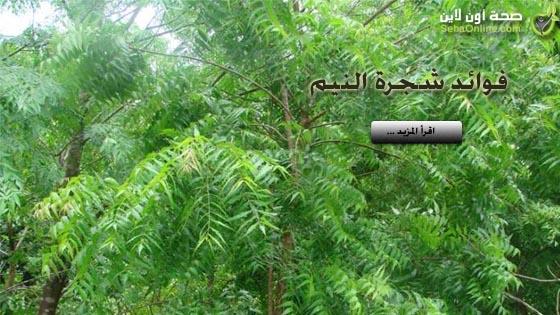 شجرة النيم فوائد شجرة النيم المذهلة للصحة