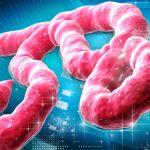 اعراض الاصابة بفيروس ايبولا