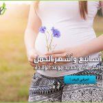 حساب أسابيع الحمل