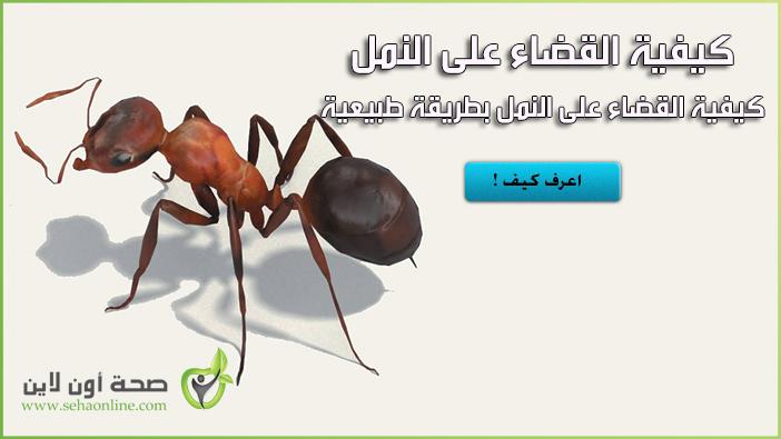 كيفية القضاء على النمل بطريقة طبيعية