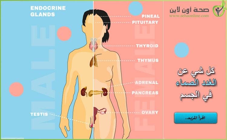 غدد الجسم تعرف على الغدد الصماء في الجسم ووظائفها بالصور