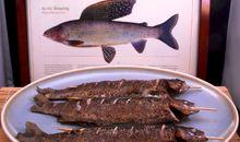 سمك التيمالوس مخبوز أو مشوي