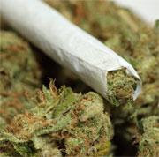 ضغوط لإدخال الماريجوانا في العلاجات الطبية بأمريكا