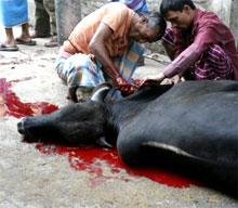 السعودية تفرض حظراً مؤقتاً على اللحوم المستوردة من بنغلاديش