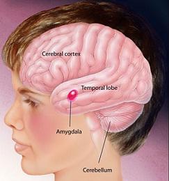 باحثون يتوصلون إلى تفسير آلية جينية تسبب الإصابة باضطراب التوحد