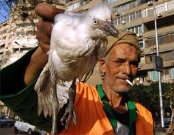 الاشتباه بأول إصابة جديدة بأنفلونزا الطيور في الفيوم بمصر