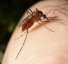 التحذير من أدوية ملاريا مقلدة مصدرها الصين تسبب الوفاة