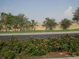 رغم الشمس الحارقة الخليجيون يعانون نقصاً في فيتامين د