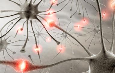 اكتشاف خلية جينية بالدماغ مسئولة عن الوزن الزائد و السمنة