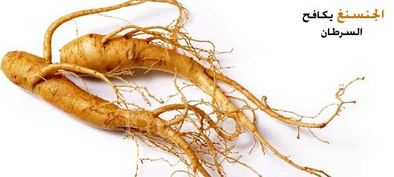 نبات الجنسنج أمل جديد للحد من أعراض التعب لمرضى السرطان