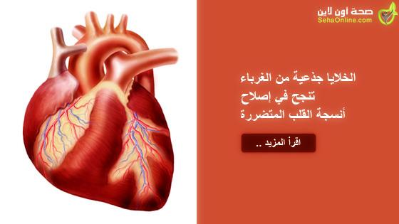 الخلايا جذعية من الغرباء تنجح في إصلاح أنسجة القلب المتضررة