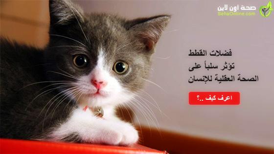 فضلات القطط تؤثر سلباً على الصحة العقلية للإنسان