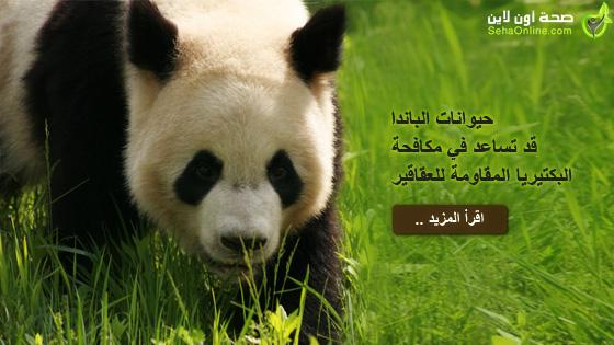 حيوانات الباندا قد تساعد في مكافحة البكتيريا المقاومة للعقاقير