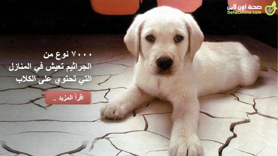 7000 نوع من الجراثيم تعيش في المنازل التي تحتوي على الكلاب