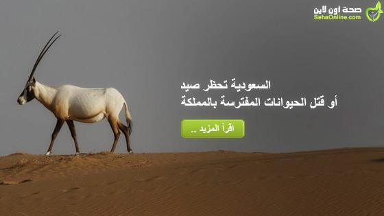 السعودية تحظر صيد أو قتل الحيوانات المفترسة بالمملكة