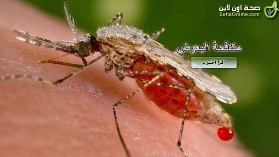 علماء يبحثون سبل القضاء على مقاومة البعوض لعقاقير الملاريا